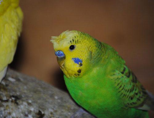 Choisir son oiseau de compagnie