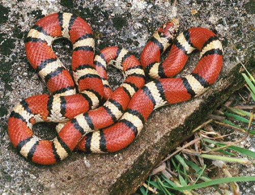 Le serpent est-il un bon animal de compagnie ?