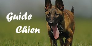 guide chien