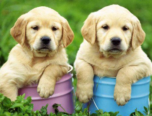 Alimentation biologique pour chiens, chats, oiseaux et rongeurs