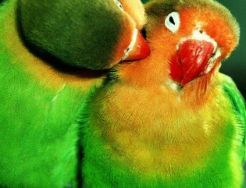 Comment nourrir son oiseau de compagnie
