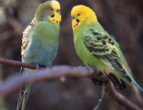 Manipuler un oiseau avec précaution
