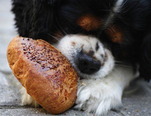 Comment et quand nourrir mon chien?
