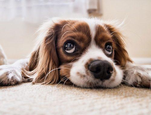 Que couvre une assurance pour chien ?