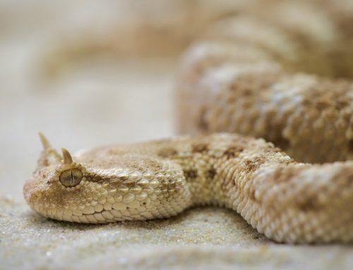 Comment choisir son substrat terrarium pour son reptile ?