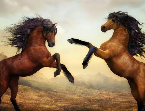 Choisir une alimentation adaptée pour vos chevaux